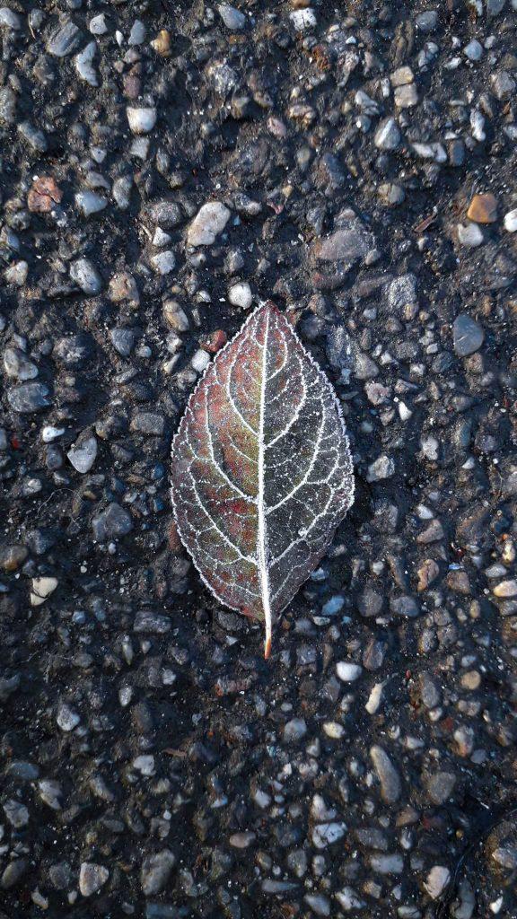 frunza inghetata cismigiu