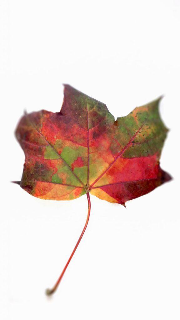 frunza multicolora toamna cismigiu