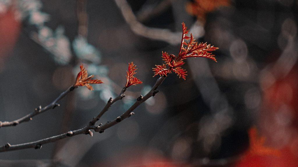 muguri roscati cismigiu primavara martie