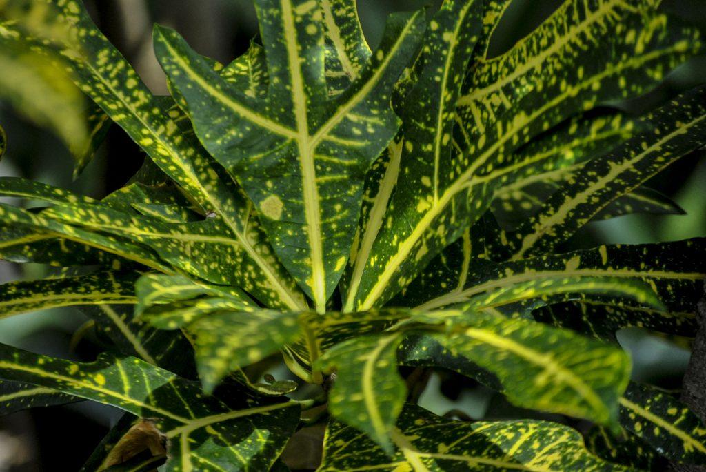 Plante sere gradina botanica kroton