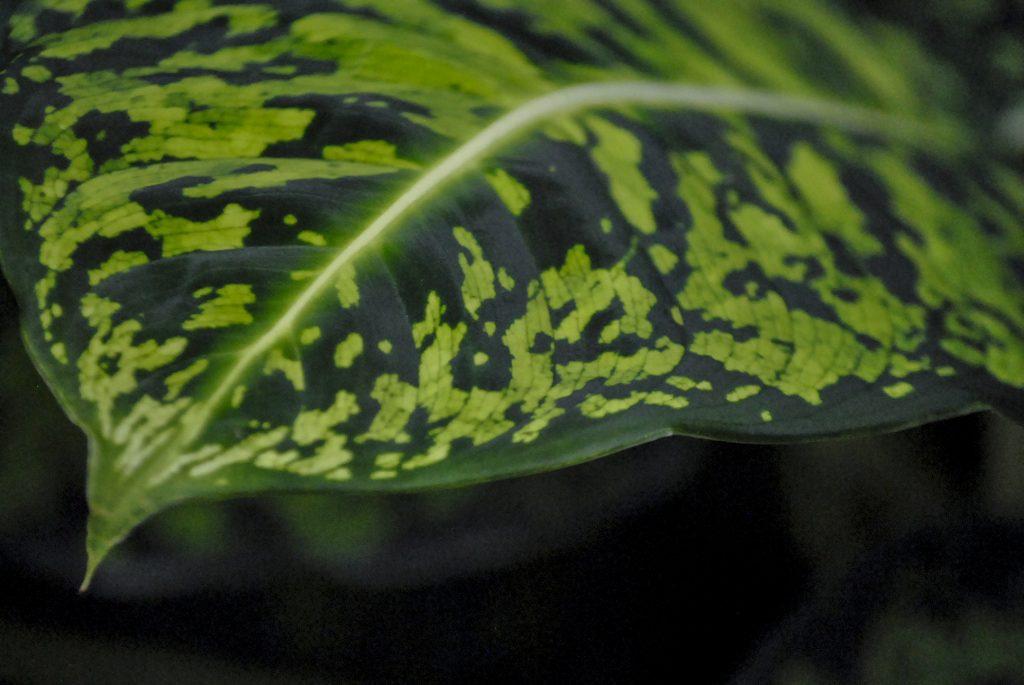 Plante sere gradina botanica textura frunza