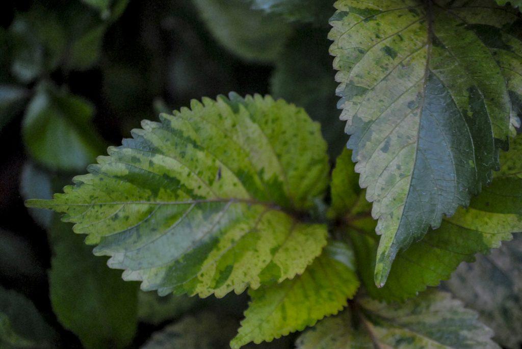 Plante sere gradina botanica textura frunze