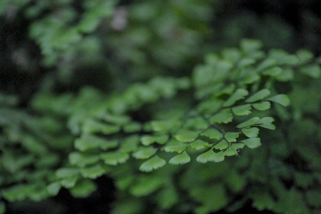 Plante sere gradina botanica feriga