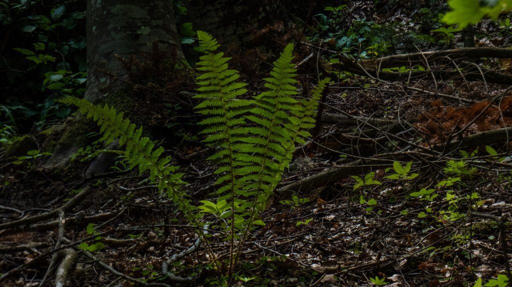 flora feriga busteni cascada urlatoarea