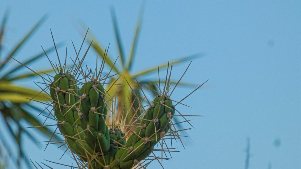 cactus spre Agii Apostoli